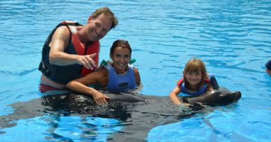 Seelöwen Interaktion Lanzarote
