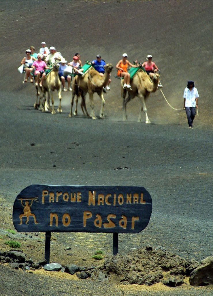 Auf der Südtour Lanzarote für Kreuzfahrtgäste können Sie auf einem Dromedar reiten