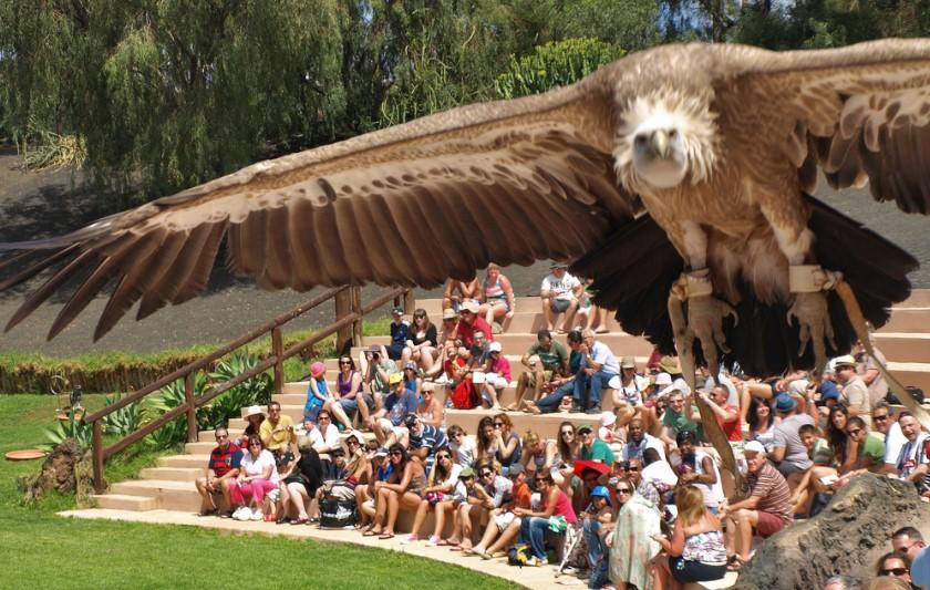 Rancho Texas Park Tierpräsentationen