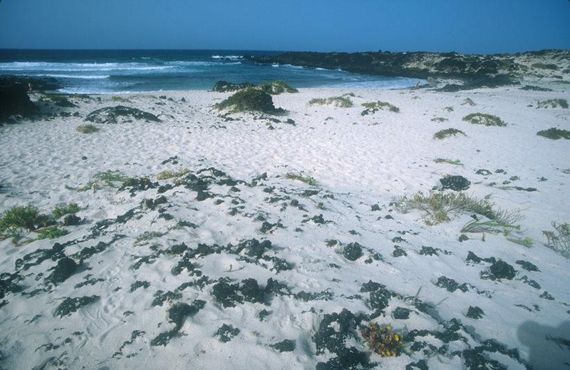 Schöne Strände Lanzarote - bei Orzola