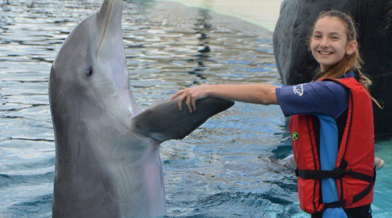 Interaktion mit Delfinen auf Lanzarote