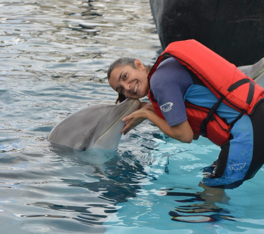 Delfine auf Lanzarote