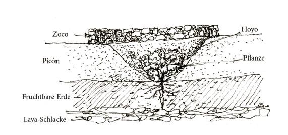 Skizze Wein Lanzarote