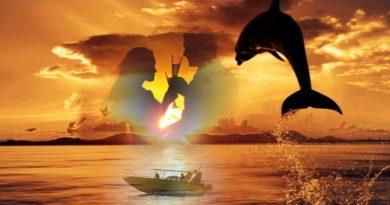 Sonnenuntergang & Delfine