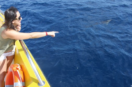 Kurzer Delfin Bootausflug
