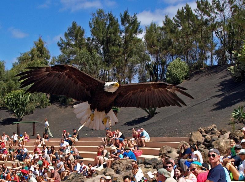 Rancho Texas Park Lanzarote Raubvögel