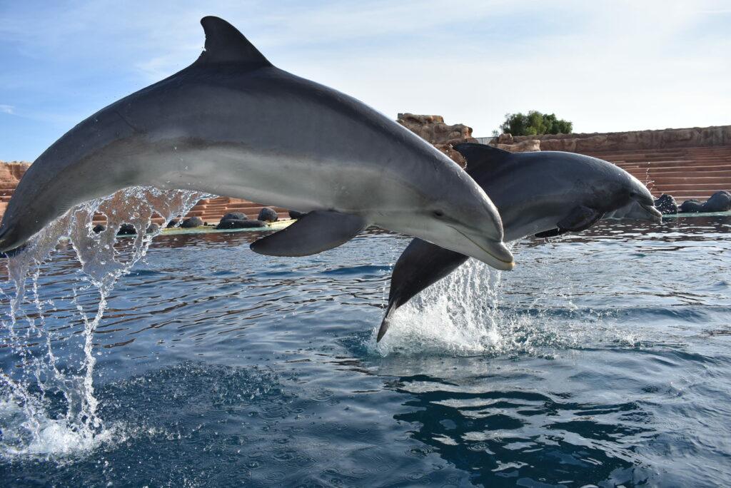 Delfine im Rancho Texas Park