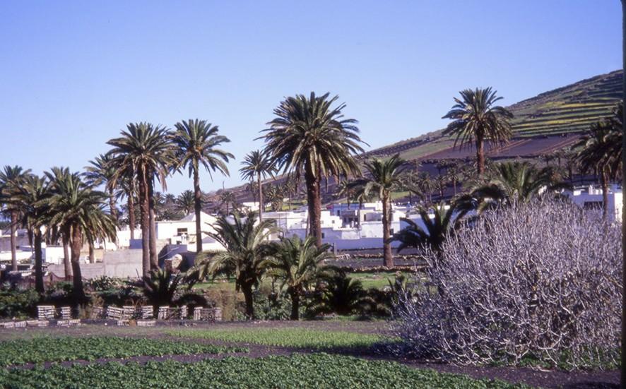 Haría - das Tal der 1000 Palmen