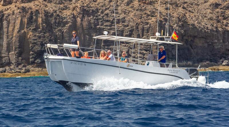 Delfine und Wale Safari Lanzarote