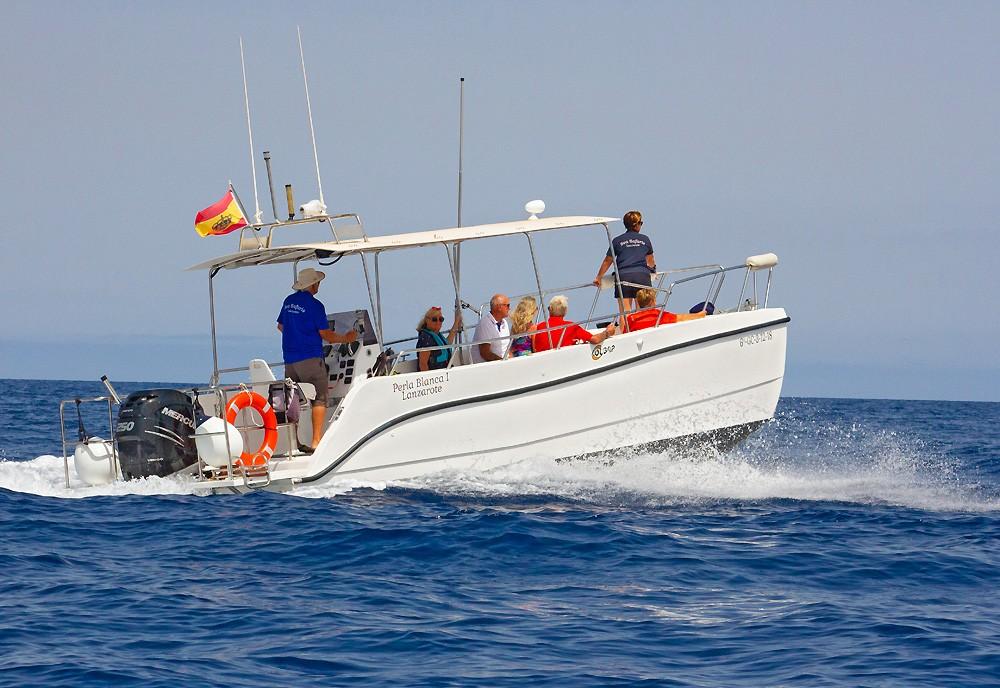 Delfien und Wale Safari Lanzarote Boot