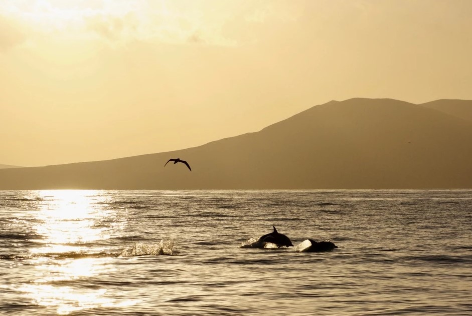 Delfine vor Lanzarote