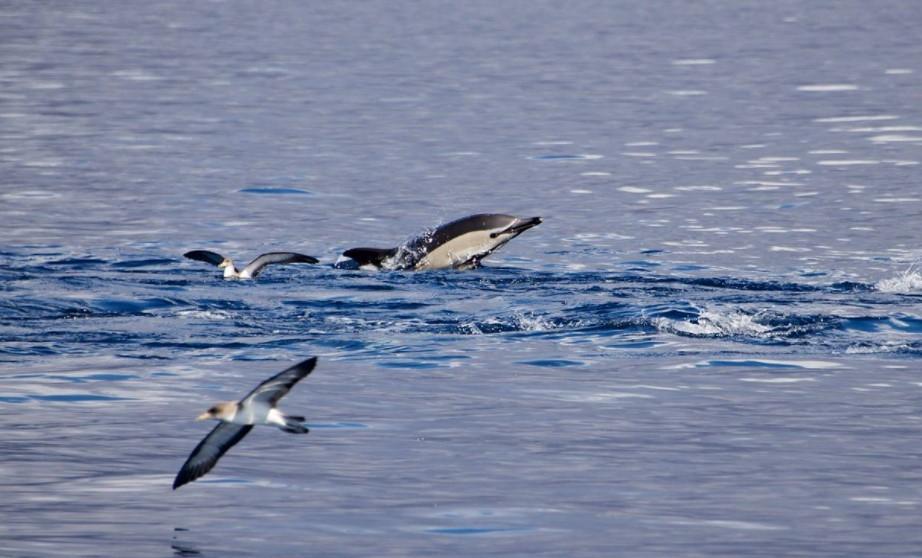 Delfin Safari Lanzarote